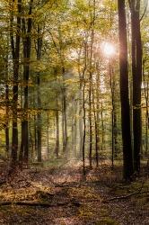 Herbstanfang im Klecker Wald