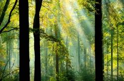 Herbst im Klecker Wald