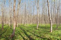 Junger Wald  (hochauflösende Aufnahme 160 MPixel)