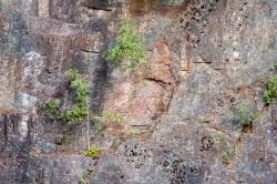 Birken im Granit