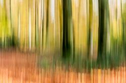 Wald, Schwenk-Technik